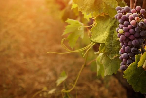 wine-virtuoz